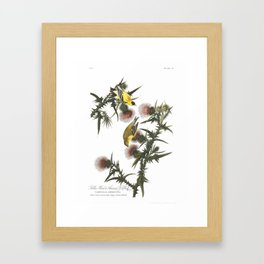 Goldfinch And Thistle Framed Art Print