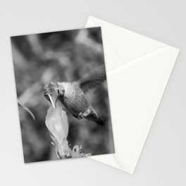 Hummingbird and the Flower- Black and White Stationery Cards