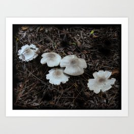 Beautiful Mushrooms Art Print