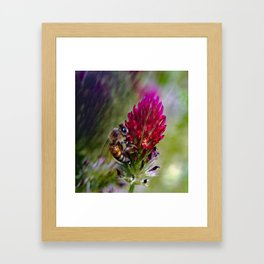 Bees and Red Clover Framed Art Print