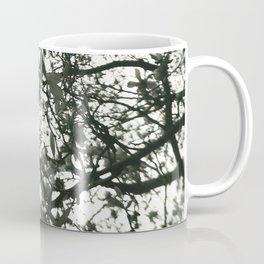 Cherry blossoms in bloom Coffee Mug