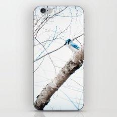 Mr Blue Jay iPhone & iPod Skin