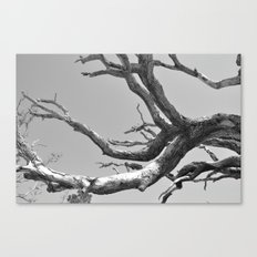 Driftwood Ladder B/W Canvas Print
