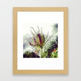Love in a Mist Pod Framed Art Print
