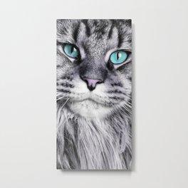 chat lolita yeux bleus - cat - main coon Metal Print