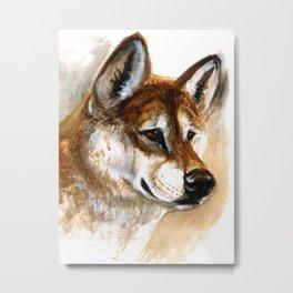 Dingo realistic Metal Print