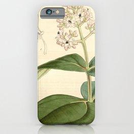 Flower 4569 medinilla javanensis Javanese Medinilla1 iPhone Case