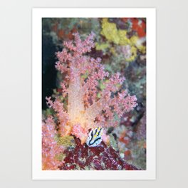 A nudibranch parked under a coral tree Art Print