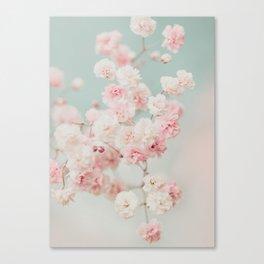 Gypsophila pink blush ll Canvas Print