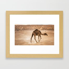 Lone Dromedary Framed Art Print