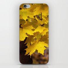 Autumn leaves 7258 iPhone & iPod Skin