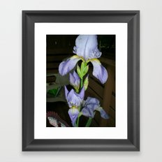 Glistening Irises After The Storm Framed Art Print