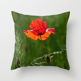 Red poppy in summer Throw Pillow