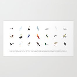 Cape Cod Birds: A Minimalist Field Guide Art Print