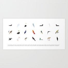 Cape Cod Birds: A Minimalist Field Guide Art Print