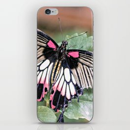 Majestic Tropical Butterfly iPhone Skin