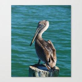 Pelican On A Pole Canvas Print