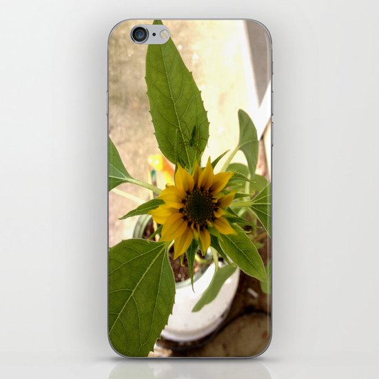 Flower Spider iPhone & iPod Skin