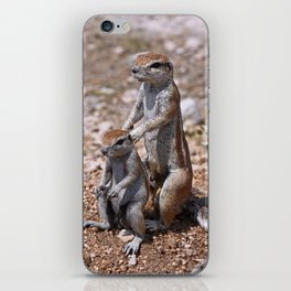The Massage - Funny Squirrels wildlife in Africa iPhone Skin
