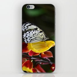 Tree Nymph Butterfly iPhone Skin