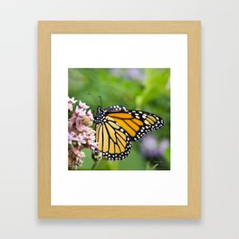 Colorful Monarch Butterfly Framed Art Print