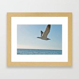 Captiva Gull Framed Art Print