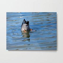 Duck Butt Metal Print