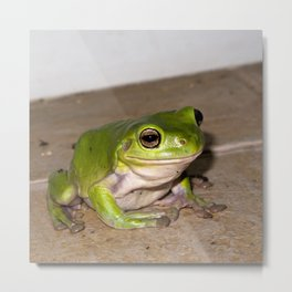 A beautiful green tree frog sitting on tiles Metal Print