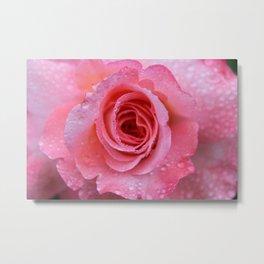 Pretty Pink Rose Metal Print