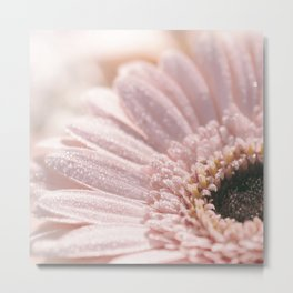 Light Pink floral Daisy Flower with water droplets- flowers Metal Print