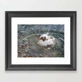 Duck Splashing Water Creating Ripples on Riverbank Framed Art Print