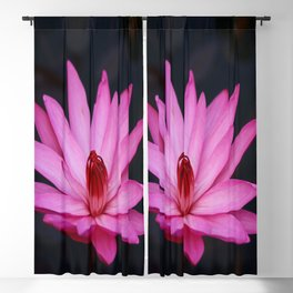 Radiant Pink Blackout Curtain