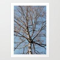 birch Art Prints featuring Birch by Monica Georg-Buller