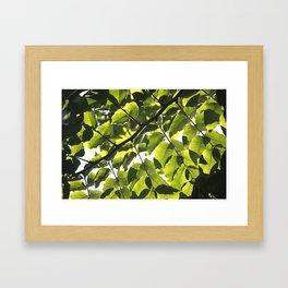 Leaves IV Framed Art Print