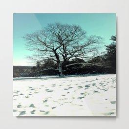 Wise Winter Tree Metal Print