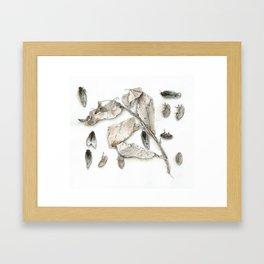 Cicada Display No. 1 Framed Art Print