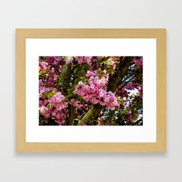 Flower explosion Framed Art Print