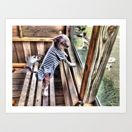 Chinese crested dog on Porch. Art Print