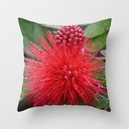 Powderpuff Plant Throw Pillow