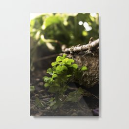 Nature - Clovers Metal Print