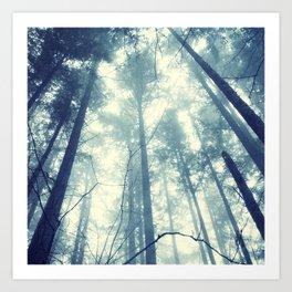 Fir and Fog Photograph Art Print