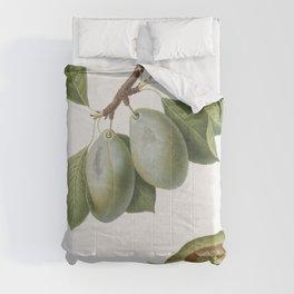 Plum (Prunus Catalanica) from Pomona Italiana (1817 - 1839) by Giorgio Gallesio (1772-1839) Comforters