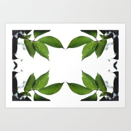 Mesmerizing Nature | Leafy Frame Up Art Print