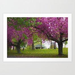 Cherry Blossom Trees in Richmond Art Print