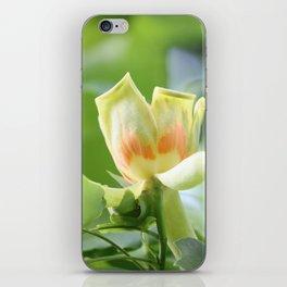 Tulip Tree - Liriodendron iPhone Skin