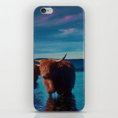 Different cows iPhone & iPod Skin