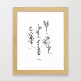 Kitchen Herbs Framed Art Print