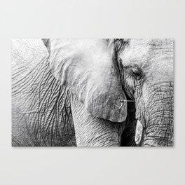 Elephant Wrinkles Canvas Print