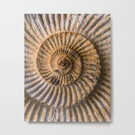 Earth treasures - brown fossil Metal Print
