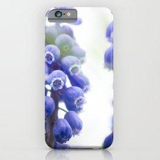 Peek-a-Blue Grape Hyacinth iPhone 6s Slim Case